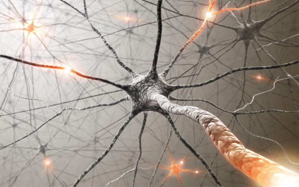 brain-activation