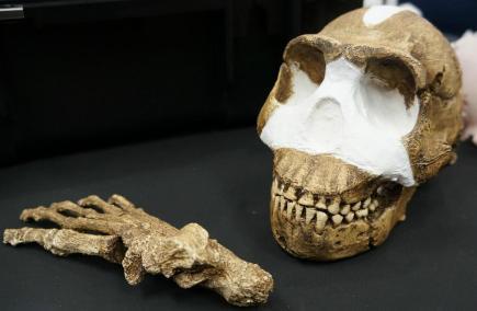 هومو ناليدي: تعرف على أشباه البشرالمنقرضون