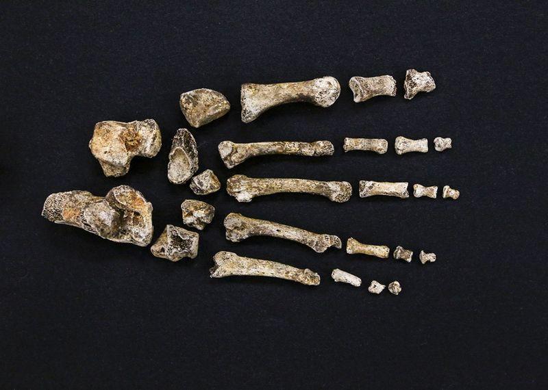 قدم هومو ناليدي تشبه قدم الإنسان