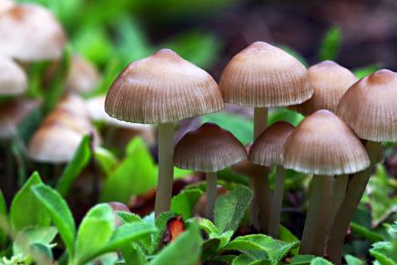 تجربة شخصية: الفطر السحري.. علاج الطبيعةللاكتئاب