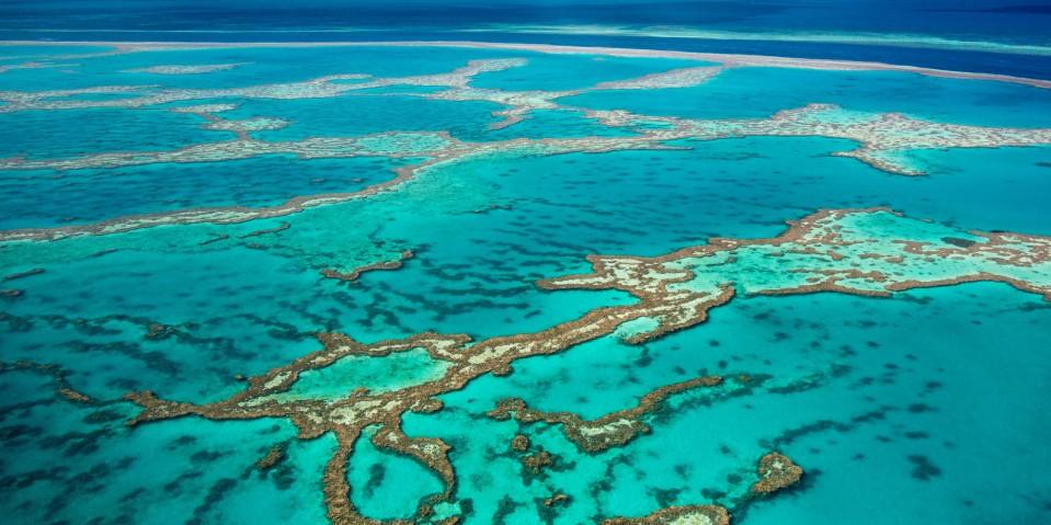 reef environment