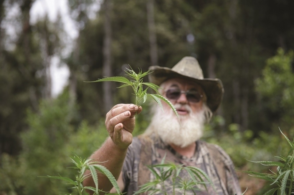 raphael-mechulam-father-cannabis-discover-thc-body-image-1455892109-size_1000