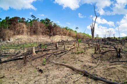 خُمس نباتات العالم مهددة بالانقراض والسبب ليس التغير المناخيوحده