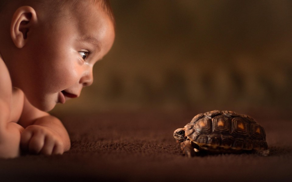 baby-turtle-curiosity-friend-childwood-explore-photo-hd-wallpaper